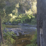 Los parques del Bosque Lluvioso de Gondwana