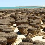 Visitar los estromatolitos en Hamelin Pool