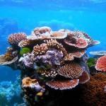 Cómo llegar a la Gran Barrera de Coral