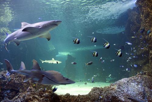 El Sydney Aquarium, una experiencia única