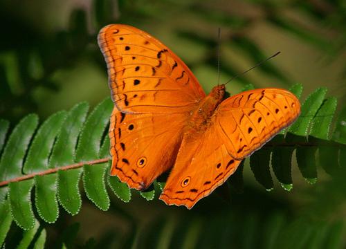 Santuario de las Mariposas