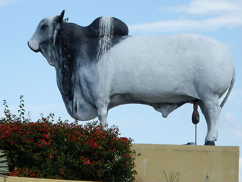 Rockhampton, capital australiana de la carne
