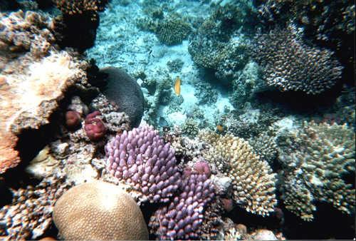 Gran Barrera de Coral, maravilla natural
