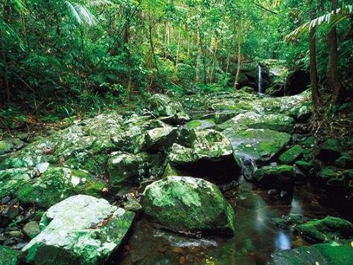 Parque Nacional Daintree, en Queensland