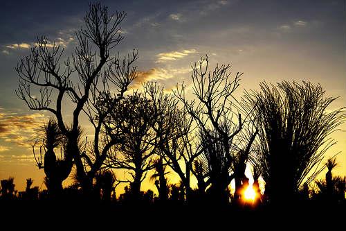 Parque Nacional Yanchep cerca a Perth