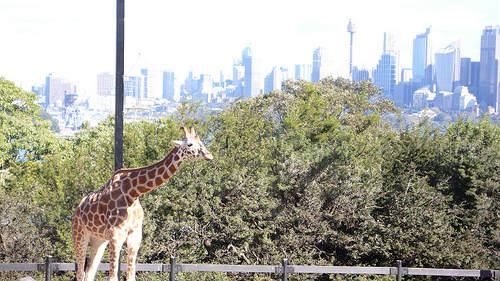 Entretenida visita al Zoológico Taronga en Sidney