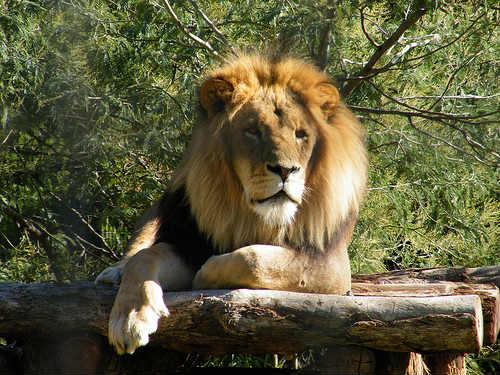 Zoológico de Melbourne, el más antiguo de Australia