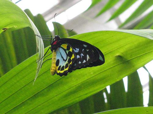 El maravilloso Santuario Australiano de Mariposas