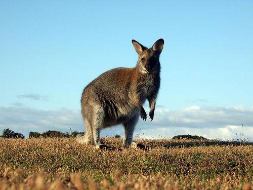 Parque Nacional Narawntapu en Tasmania