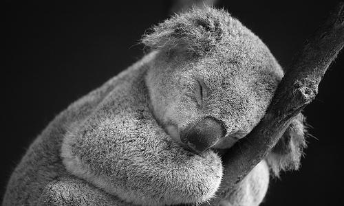 La riqueza de la fauna australiana